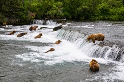 Bears fishing salmon at brooks fall in Katmai National Park and Preserve, Alaska