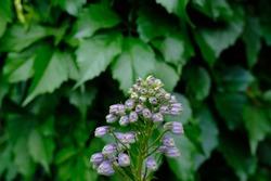 Beatiful Flower grean summer garden