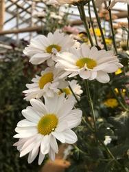 Beatiful flower. the flower is white
