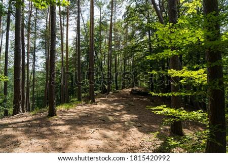 beatiful landscape of the pfälzer wald wood hills, rheinland-pfalz, germany Stock foto ©