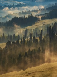 Beatiful mornig haze forest with sunrays in wilderness of Pieniny NP, Slovakia. Morning pasture with sunrise light a nd mist