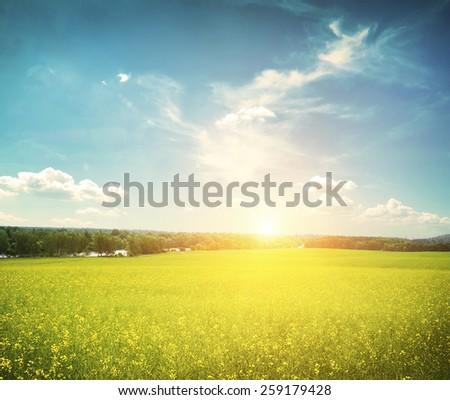 Beatiful morning field with bright sun #259179428