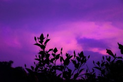 Beatiful sky with purple and pink clouds color, unique sunset with a nice leaves silhouette