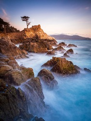 Beatiful sunset with a view of a lonley pine on the californian coastline