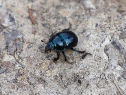 Beatle. The photo was taken in a forest Park.
