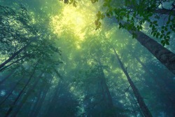 Beautful tranquil lanscape of mountain foggy forest