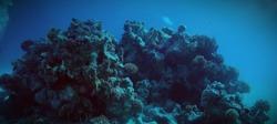 beauties of the underwater