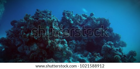 beauties of the underwater #1021588912