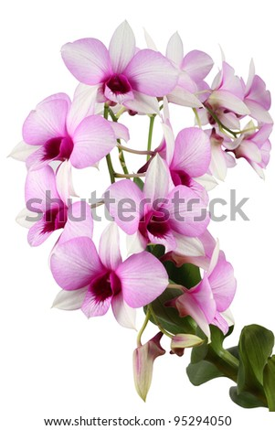 beautifl orchid isolated on white
