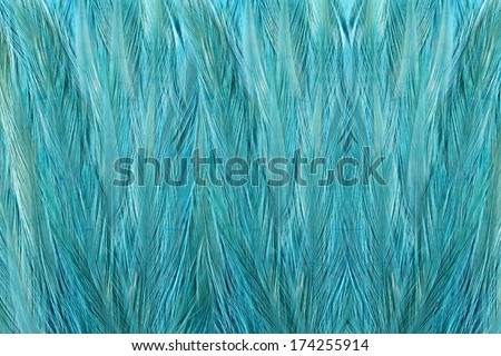 Beautiful abstract background consisting of pink guinea fowl feathers