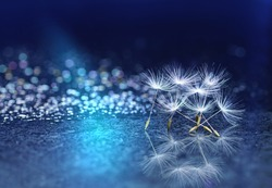 Beautiful abstract blue background on a mirror surface of the seeds of dandelion flowers with reflection close-up macro with sparkling water drops rain dew. Colorful air artistic image .