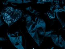 Beautiful abstract color black and blue flowers on black background and dark graphic white flower frame and blue leaves texture, blue background, colorful graphics banner