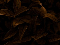 Beautiful abstract color brown and yellow flowers on dark background, orange flower frame and brown leaves texture, brown background, orange and gold love banner, orange isolated, dark leave texture