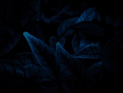 Beautiful abstract color gray and blue flowers on dark background and dark  flower frame and blue leaves texture, blue background, dark blue graphics banner