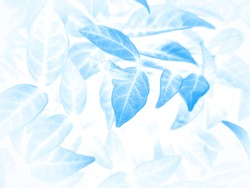 Beautiful abstract color gray and blue flowers on white background and dark  flower frame and blue leaves texture, blue background, dark blue graphics banner