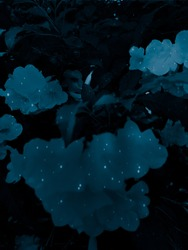 Beautiful abstract color white and blue leaves marble on black background and black and blue granite tiles floor on blue background, love white leaves banners graphics, blue flowers