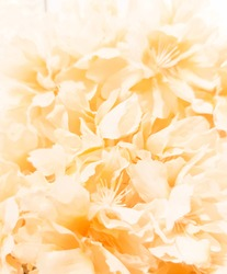 Beautiful abstract color yellow flowers on white background, orange flower frame and brown leaves texture, brown background, gold love banner, white isolated, yellow leaves, white flowers
