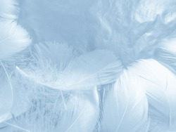 Beautiful abstract colorful blue feathers on white background and soft white feather texture on blue pattern and blue background, feather background, blue banners