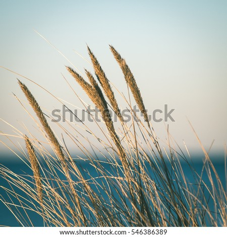 beautiful abstract grass texture on sunset with reflections and rays of sun - instant vintage square photo #546386389