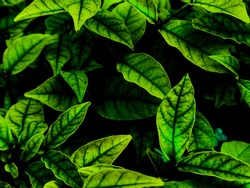 Beautiful abstract green flowers on dark background and yellow flower frame and green leaves texture, green background, dark theme, green leaves texture