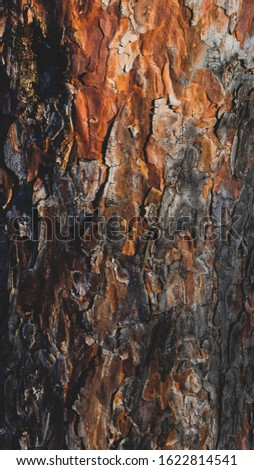 Beautiful Abstract Grunge Decorative Dark Wooden Background