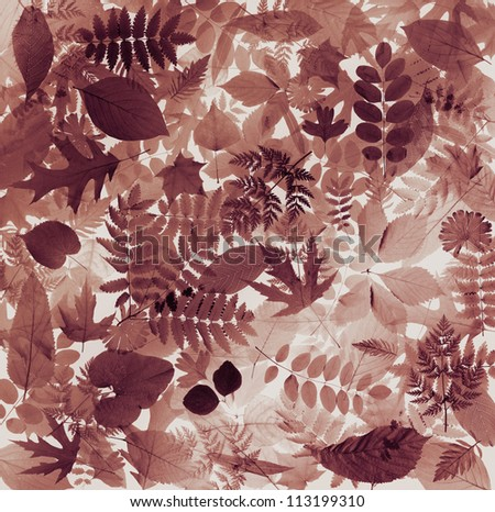 Beautiful abstract leaves nature background in muted sepia colors
