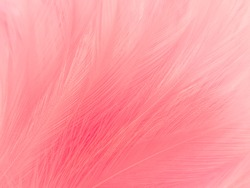 Beautiful abstract light pink feathers on white background,  white feather frame texture on pink pattern and pink background, love theme wallpaper and valentines day, sweet heart wedding