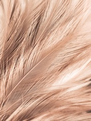 Beautiful abstract orange and white feathers on white background, soft brown feather texture on white pattern background, yellow feather background, light brown texture