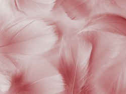 Beautiful abstract red feathers on white background, white feather texture on red pattern and red background, pink feather wallpaper, love theme, wedding valentines day, red gradient
