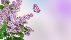 Beautiful abstract spring background. A butterfly flies to a lilac flower.