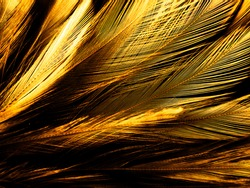 Beautiful abstract white and brown feathers on black background, soft yellow feather texture on white pattern and yellow background, feather background, gold feathers banners