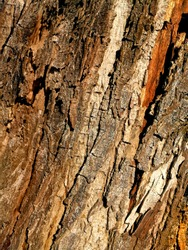 Beautiful Abstract Wood Texture Nuances Of An Old Tree
