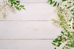 Beautiful acacia flowering branches with a lot of blossoms on white wooden background. Springtime concept. Copy text space, top view.
