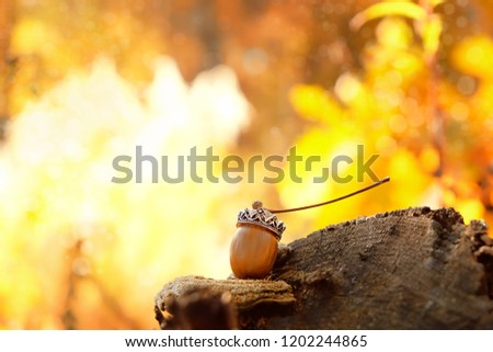 beautiful acorn in the crown. Autumnal still life with acorn. autumn Royal acorn. amazing fantasy picture. close up, copy space. selective soft focus