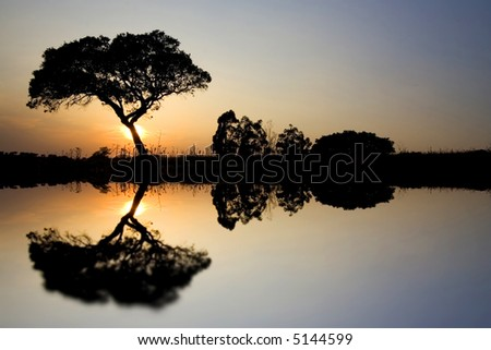 Beautiful African Landscape with Lonely tree in the Savannah at sunset