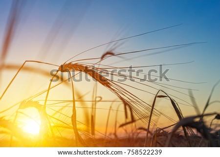 beautiful agriculture sunset...