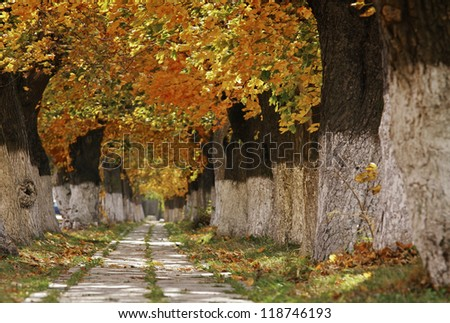 Beautiful alley between the autumn yellow old trees