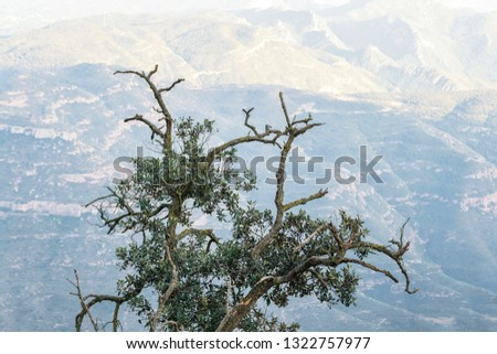 Beautiful alone tree on mountain background. Large branch silhouette at hill top #1322757977