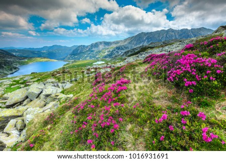Beautiful alpine glacier lake, high mountains, cloudy sky and wonderful pink rhododendron flowers, Retezat National Park, Carpathians, Romania, Europe  #1016931691