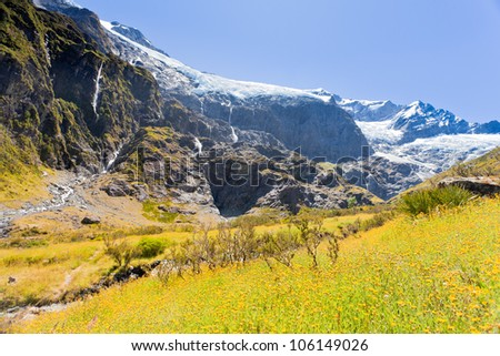Beautiful alpine valley with yellow blooming alpine meadow next to hanging Rob Roy Glacier in Mount Aspiring National Park, Southern Alps, New Zealand