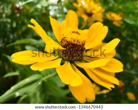 Beautiful and beautiful sunflowers