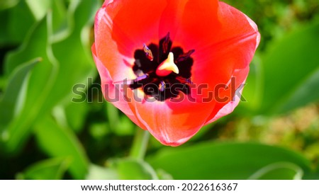 Beautiful and colorful flowers in the park ciani Zdjęcia stock ©