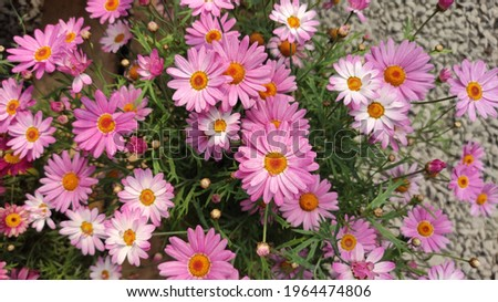 Beautiful and colorful fresh flowers of spring Stok fotoğraf ©