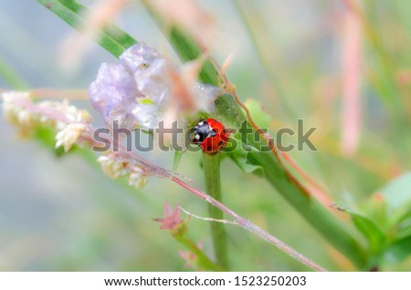 Beautiful and colorful ladybug close-up picture.
