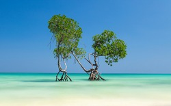 Beautiful and colorful long exposure of Mangrove trees standing in the sea on Havelock Island in the Andaman and Nicobar Islands, India during high tide.