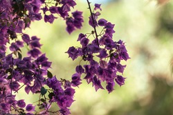Beautiful and colorful tipical andalusian spring plant with blurred nature background