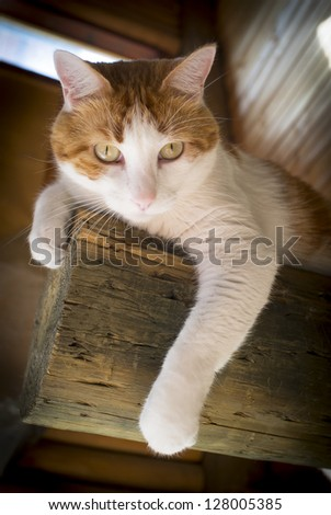 beautiful and friendly male cat perched on stick. Image for cat food container