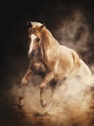 Beautiful and graceful horse portrait