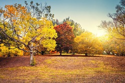 Beautiful and peaceful autumn scene with colorful trees in the park, Adelaide Hills region, South Australia