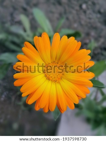 Beautiful and persuasive Picture of a flower . Foto stock ©